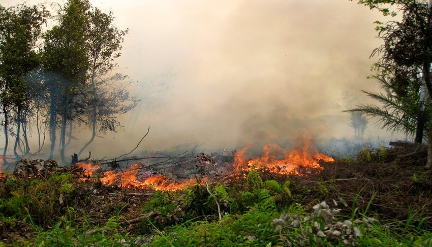 In bid to cut haze, Indonesia persuades farmers against ...